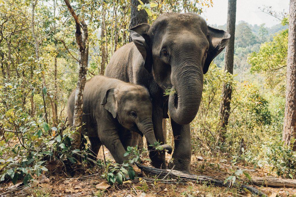 Elephant-Jungle Safari